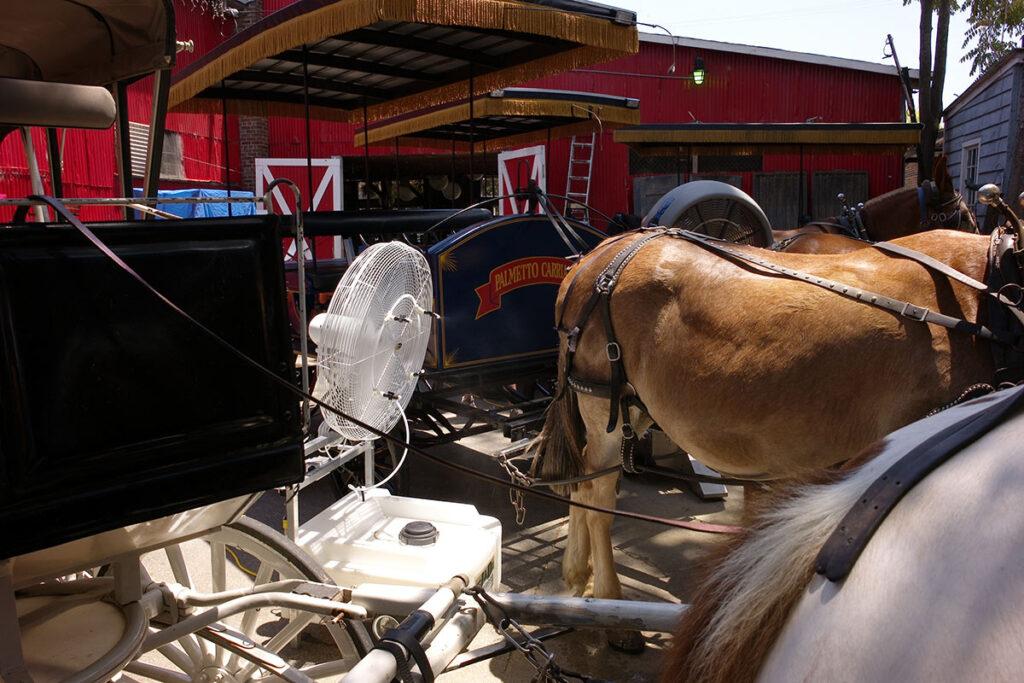 Meine Leica M8 im Einsatz. Kutschpferde werden zwischen den Fahrten gekühlt mit 35mm Summicron