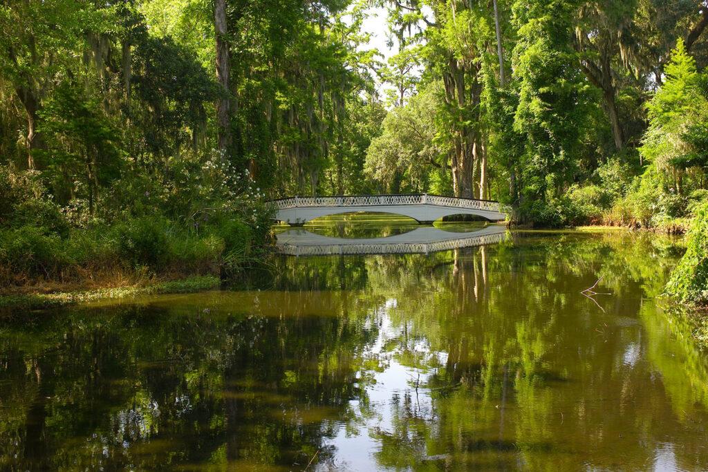 Leica M8: Cypressen Wald in Charleston (South Carolina)