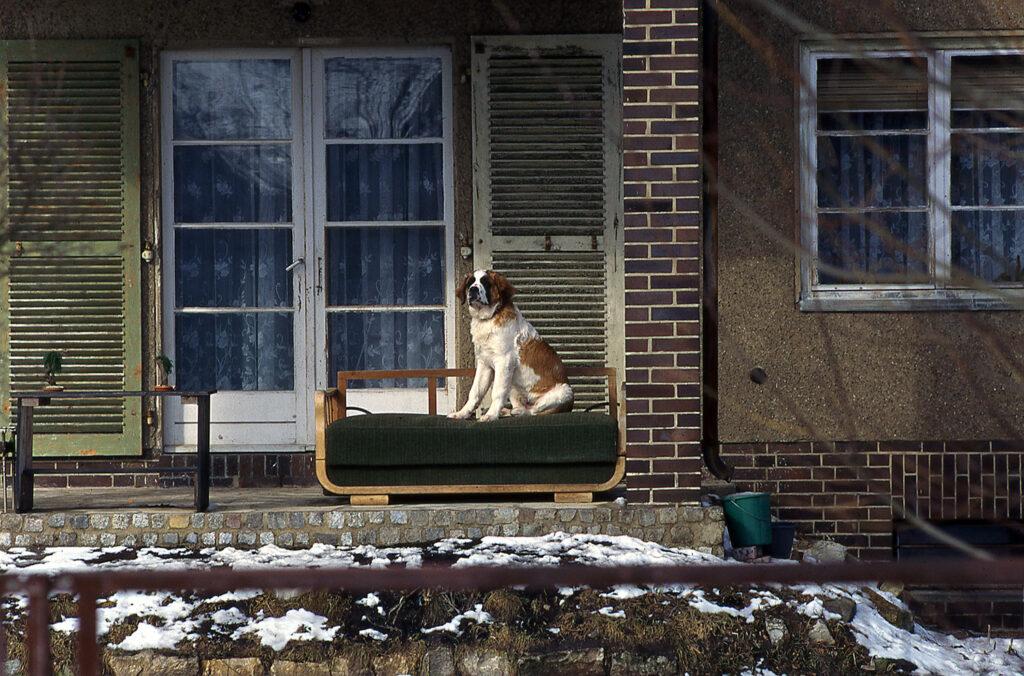Nachbars Hund im Jahr 1984, aufgenommen mit meiner Leica M4-2