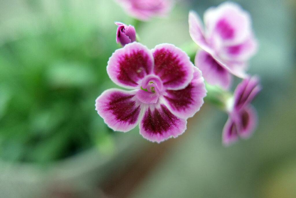 Leica D-Lux7: Blume mit fast offener Blende